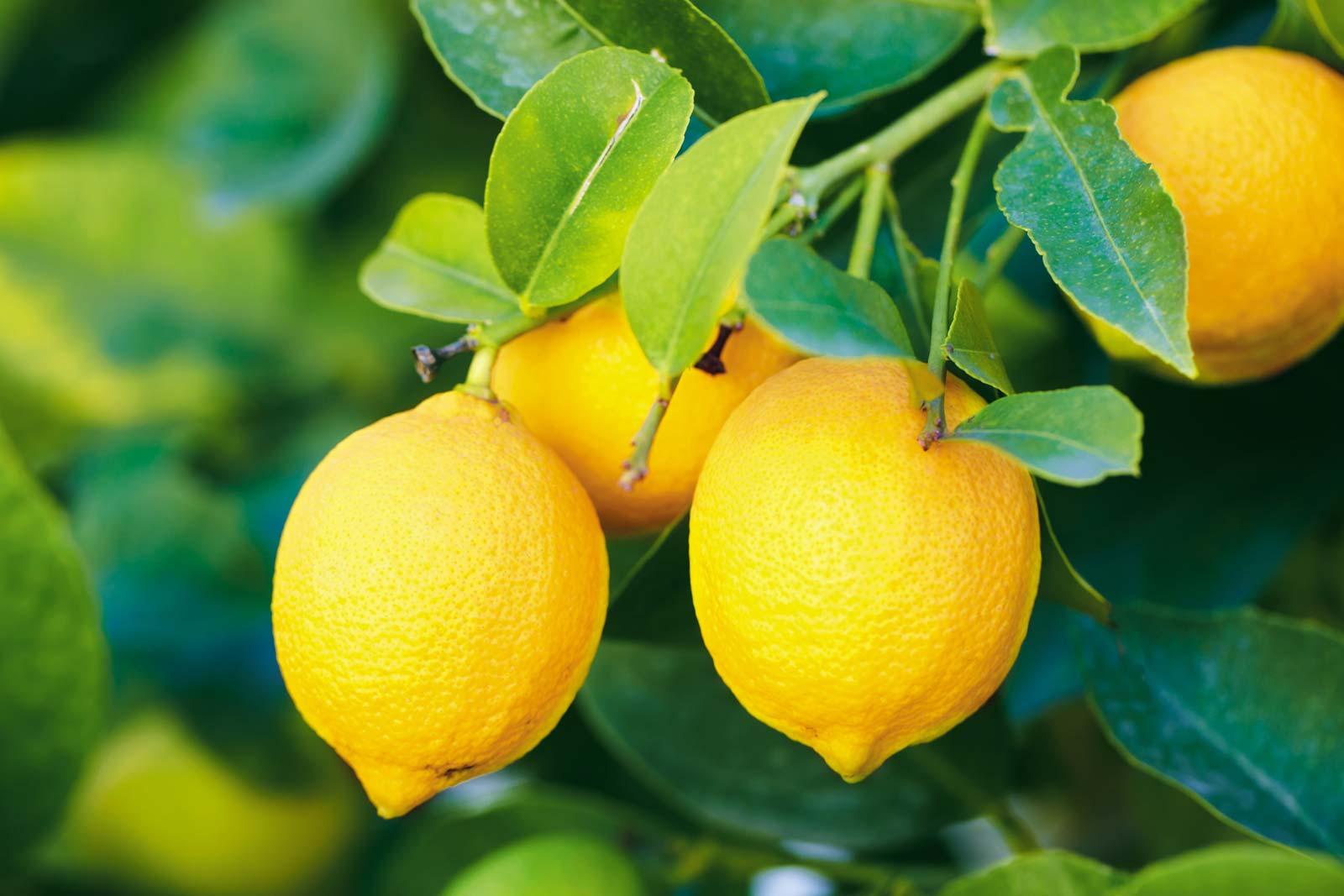 How to make lemon juice