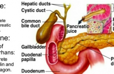 What is a major function of pancreatic juice?